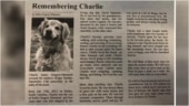 South Carolina woman pays moving tribute to pet dog in obituary
