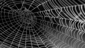How to get rid of spiders and cobwebs from your house