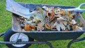 How to compost food waste and use as organic fertilizer