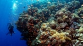 Scientists discover massive coral reef taller than Eiffel Tower, Empire State Building