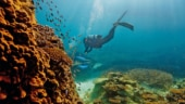 More than half corals of Great Barrier Reef lost in past 3 decades, says study