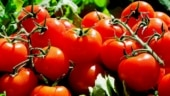 How to use tomatoes for glowing skin: Effective home remedies