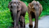 Uttarakhand Wildlife Board de-notifies Shivalik Elephant Reserve for expansion of Dehradun airport