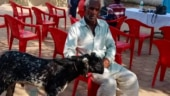 MP: 'Goat thieves' strangle, bludgeon 12-year-old to death in Mandsaur