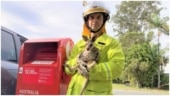 Baby kangaroo put inside post box in Australia, rescued by officers. Full story here