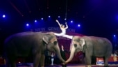 Animal Welfare Board cancels registration of 5 circuses in India