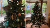 Australian family arrives home to find koala hanging from Christmas tree. Viral video