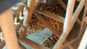 Leopard enters girl's hostel in Assam's Guwahati