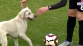 Throwback: When a stray dog disrupted a Turkish football match by wagging his tail and dribbling handsomely