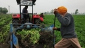Ground Report: Punjab's failed attempt with contract farming reason behind reluctance to accept farm laws?