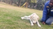 Cognizant fires Noida employee who beat up his dog in viral video