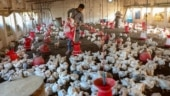 Bird-flu: Eating chicken, eggs not dangerous if cooked at 70°C for 3 seconds, says UP govt