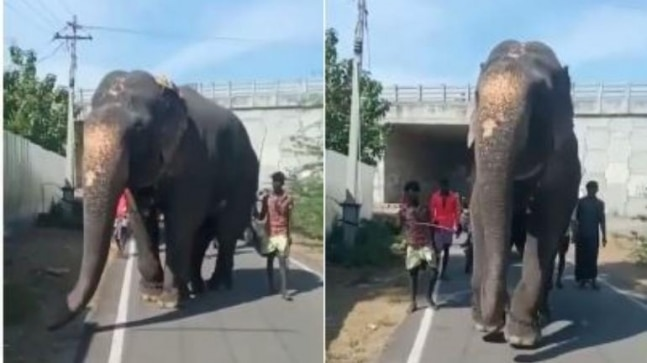 Heartbreaking video shows chained elephant struggling to walk, forced to limp in Tamil Nadu  India Today RSS Feed INDIAN GUM ARABIC – बाबुल, बबुरा, कीकर PHOTO GALLERY  | HINDIMEANING.COM  #EDUCRATSWEB 2020-04-19 hindimeaning.com https://www.hindimeaning.com/wp-content/uploads/2016/12/Indian-Gum-Arabic.jpg