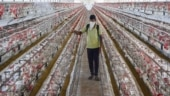 Restaurants prepare to battle bird flu concerns