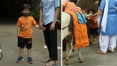 Taimur steps out of his home to feed a cow, waves at the paparazzi. Viral videos