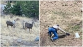US officer rescues deer with head stuck in bird feeder. Thank you, says Internet
