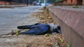Over 70 birds found dead in Kanpur in last 24 hours