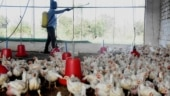 Central team reaches Kerala amid bird flu outbreak