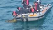 Chennai: Indian Coast Guard saves sea turtle entangled in nets