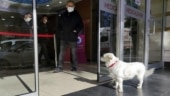 Pet dog spends days waiting outside Turkish hospital for her hooman to recover
