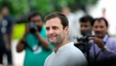 Will Tamil Nadu buy Rahul Gandhi's love for Jallikattu?