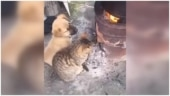 This adorable viral video of a puppy and a kitten will make you smile. Watch