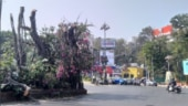 Majestic Banyan tree illegally hacked in Mumbai to improve visibility of billboards, police files case