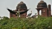 Bird flu resurfaces in Delhi Zoo, all 7 samples return positive for avian influenza