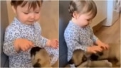 Toddler plays with puppies in adorable viral video. Watch
