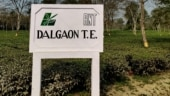 In Dalgaon, the worst violence in an Indian tea garden, and what it is today