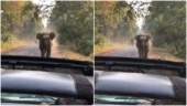 Elephant charges towards jeep after tourist says Kuch Nahi Hoga. Viral video