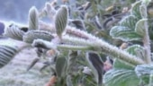 Frost bites Munnar in Kerala as temperature drops below zero, valley wakes up to white cover: Watch