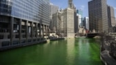Chicago River in US dyed bright shade of green; here's why