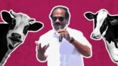Not so funny Leoni: DMK candidate says women no longer have figure 8 as they drink milk of foreign cows