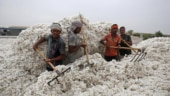 Pakistan approves import of cotton, sugar from India after 19 months