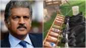 Anand Mahindra says he's discovered new energy form in adorable video. Can you guess?