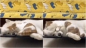 Cat cuddles with doggo in adorable viral video. It is a must-watch