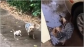 Dog rescues abandoned kitten in adorable viral video. Internet hearts it