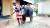 Baby elephant hugs man in cute viral pic. Internet loves it