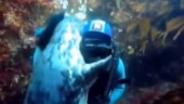 Friendly seal gives tight hug to scuba diver. Internet loves viral video