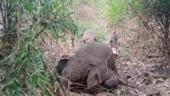 18 wild elephants found dead in Assam, lightning strikes suspected