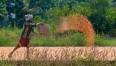 One-third of global food production at risk: Rising greenhouse emissions could push world to starvation