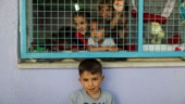 UN agency says 52,000 displaced in Gaza, Amnesty wants war crimes investigation