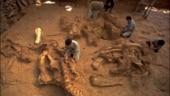 Dinosaur bones dating back to 100 million years found in Meghalaya