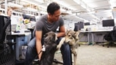 Google is officially a dog company, cats and other pets are welcome though