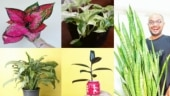 Five indoor plants that look good and clean the air