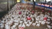 Samples from poultry farm in Ludhiana test positive for bird flu, containment protocol initiated