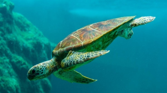 World Turtle Day 2021: Date, history, significance and quotes