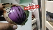Fact Check: Fungi inside refrigerators and on onions are not the ones causing mucormycosis