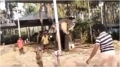 Elephant plays cricket with group of men in village. Viral video divides Internet